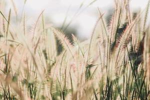 vildblommafält i naturen foto
