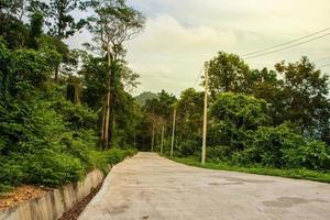 väg genom skogen foto