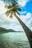 kokosnöt träd på koh chang foto