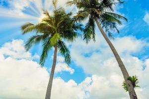 kokospalmer på koh chang foto