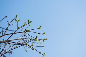 trädgrenar med blå himmel foto