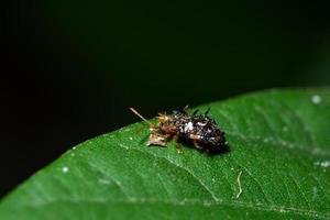 stink bug på ett blad