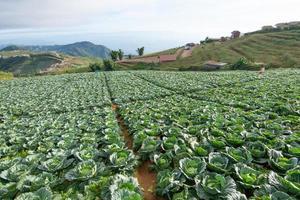 grönsaksgård på sommaren foto