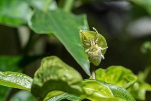 grön vivel på ett blad foto