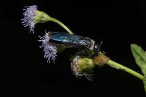 insekt på en blomma foto