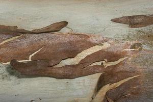 bark yta bakgrund foto