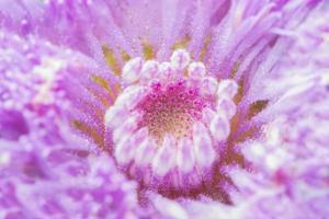 lila blomma närbild