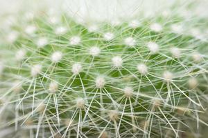 grön kaktus närbild foto