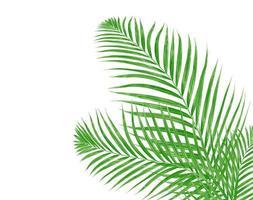 två palmblad foto