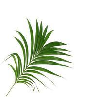 grönt blad på vit bakgrund foto