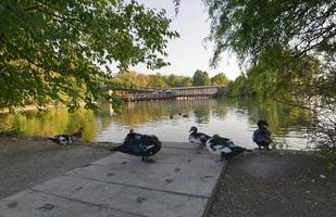 höstlandskap i en park med sjö och fåglar