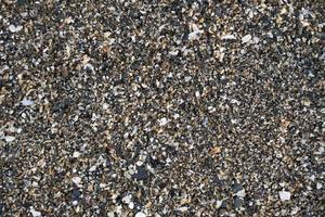 sandbotten av havet med musslor