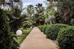 gröna palmer och växter under dagtid foto