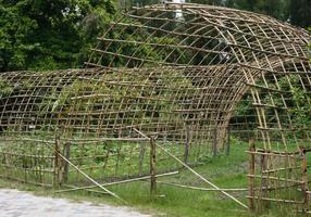 gammalt bambustaket med gröna växter foto