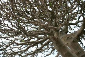 detaljerade trädgrenar