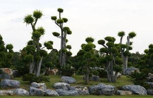 bonsai träd utanför foto