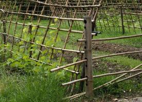 bambustaket i en trädgård foto