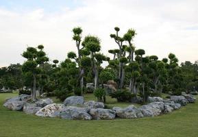 landskapsarkitektur i trädgården foto