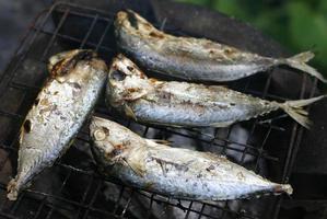 grillade makrillar på spisen