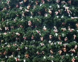närbild av en julgransdekor foto