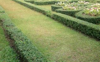 väg i trädgården foto