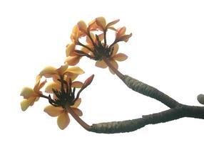 blommor på gren foto