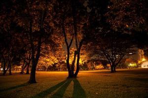 träd och gräsmatta foto