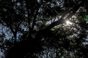 solen skiner genom träden foto