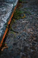 grön växt på betongytan foto