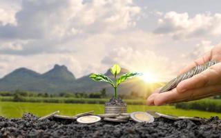 växter växer från mynt
