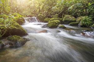 vattenfall i en grön skog foto
