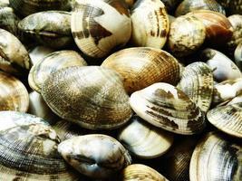 nyfångade musslor