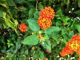 blommor utomhus i trädgården foto