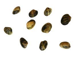 musslor på en vit bakgrund