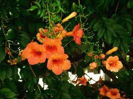 orange blommor i trädgården utomhus foto