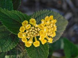gula blommor i en trädgård foto