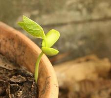 grön spirande växt foto