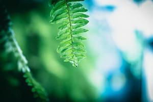 grön ormbunke med dagg foto