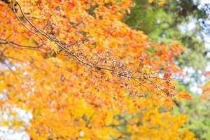 gula löv på trädet foto