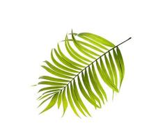 grönt blad på en vit bakgrund foto