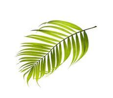 enda grönt blad på vit bakgrund foto