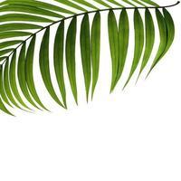palmblad med kopia utrymme foto