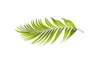 ljusgrönt palmblad foto