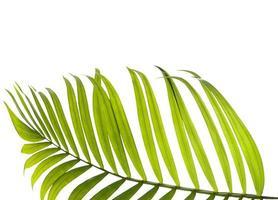 närbild av ett palmblad med kopieringsutrymme foto