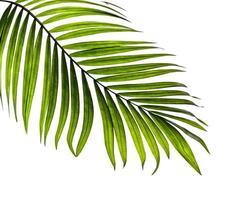 närbild av ett enda palmblad foto