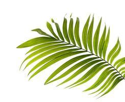 palmblad isolerad på en vit bakgrund foto