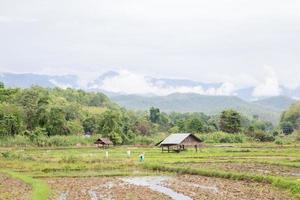 åkermark i Thailand foto