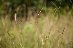 blomma av gräs foto