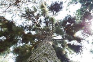 träd i skogen foto