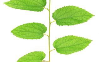 gröna blad på ånga